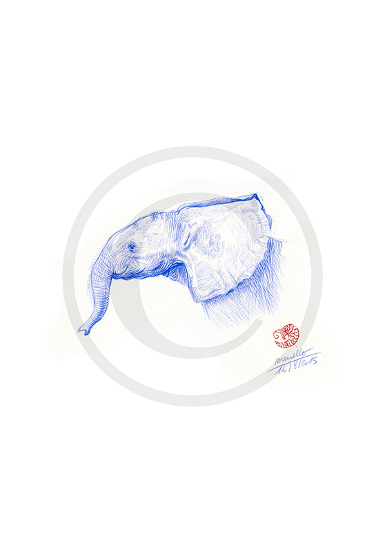 Marcello-art: Ballpoint pen drawing 314 - Baby elephant