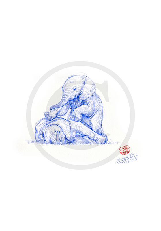 Marcello-art: Ballpoint pen drawing 316 - Baby elephant