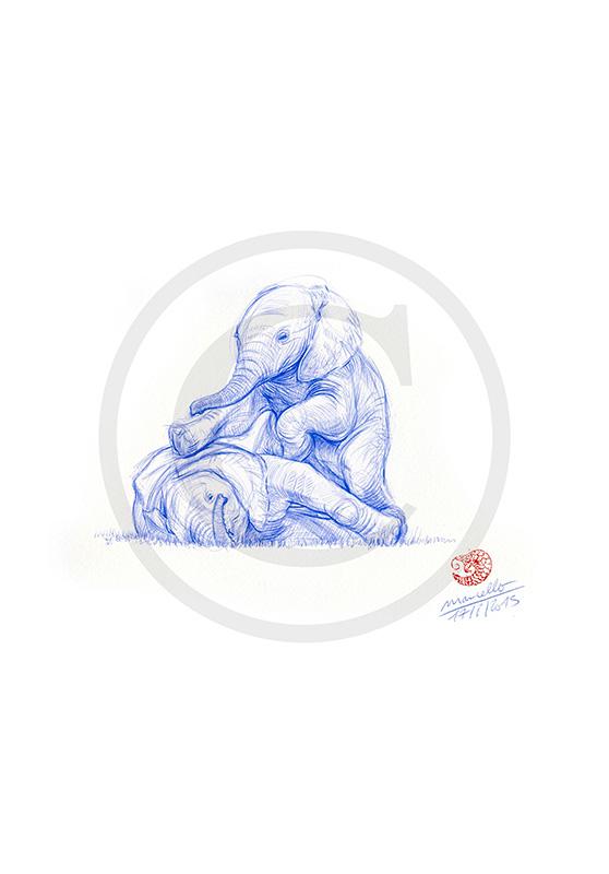 Marcello-art : Dessins au Bic 316 - Éléphanteau