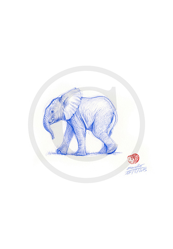 Marcello-art: Ballpoint pen drawing 317 - Baby elephant