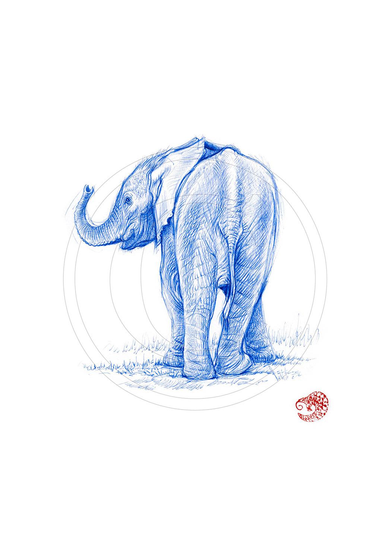 Marcello-art: Ballpoint pen drawing 328 - Baby elephant