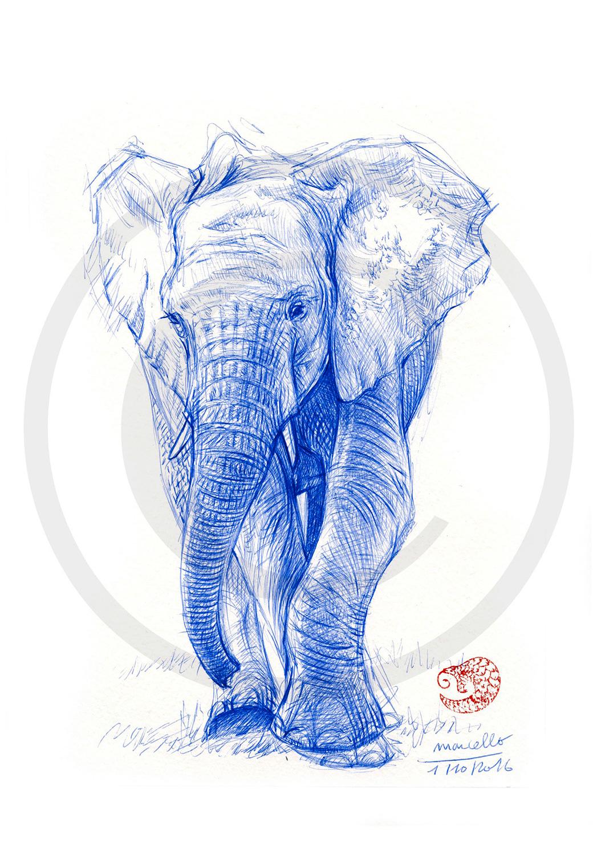 Marcello-art: Ballpoint pen drawing 350 - Baby elephant