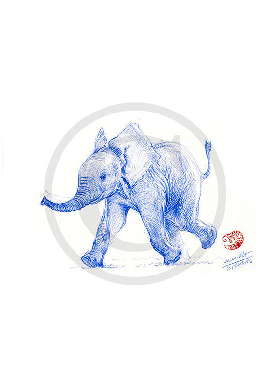 Marcello-art: Ballpoint pen drawing 351 - Baby elephant