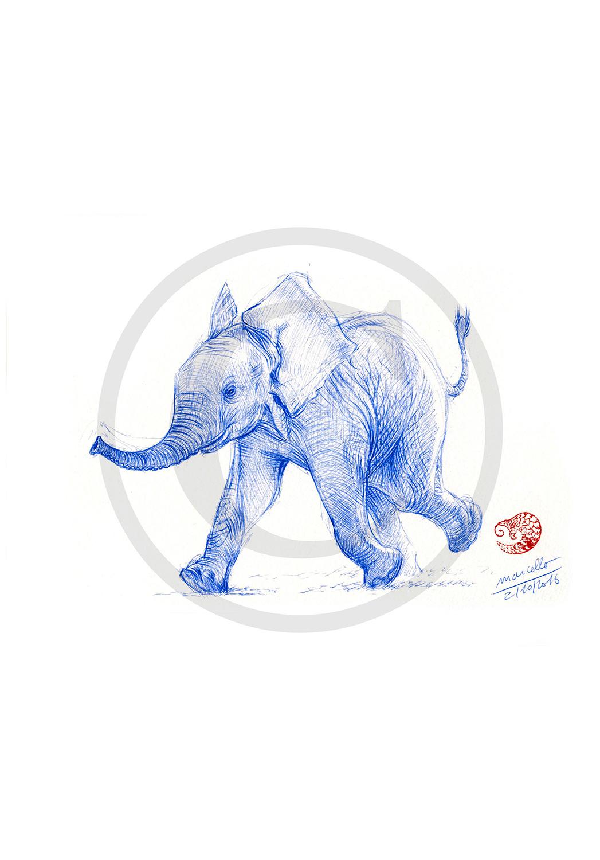 Marcello-art: Ballpoint pen drawing 351 - Baby elephant