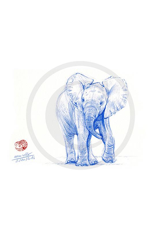 Marcello-art : Dessins au Bic 352 - Éléphanteau