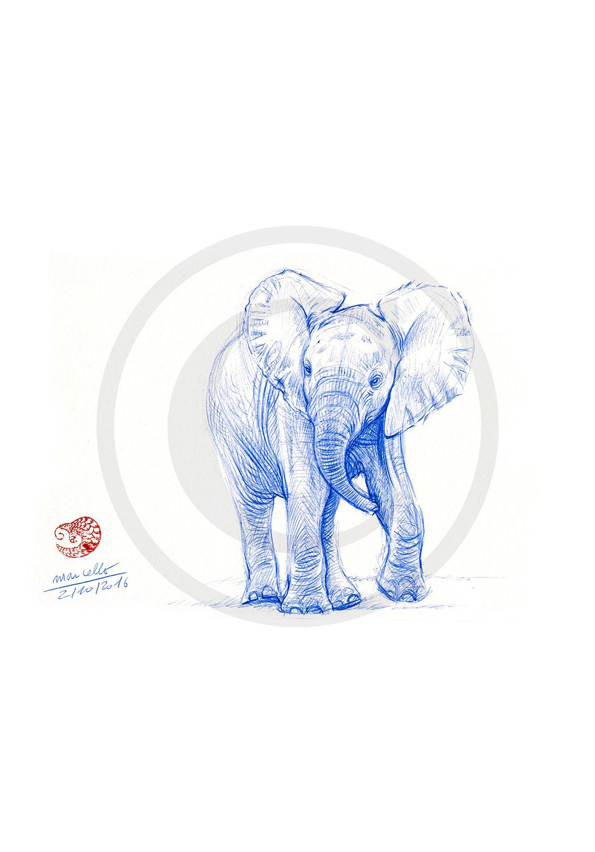 Marcello-art: Ballpoint pen drawing 352 - Baby elephant