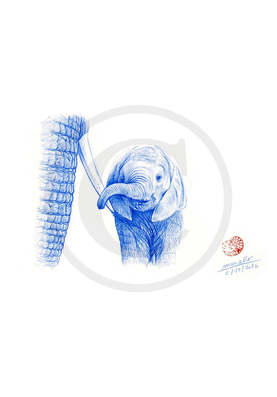 Marcello-art: Ballpoint pen drawing 353 - Baby elephant