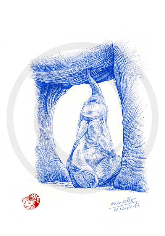 Marcello-art: Ballpoint pen drawing 355 - Baby elephant