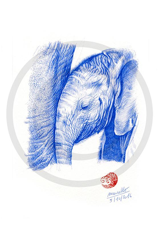 Marcello-art : Dessins au Bic 356 - Éléphanteau