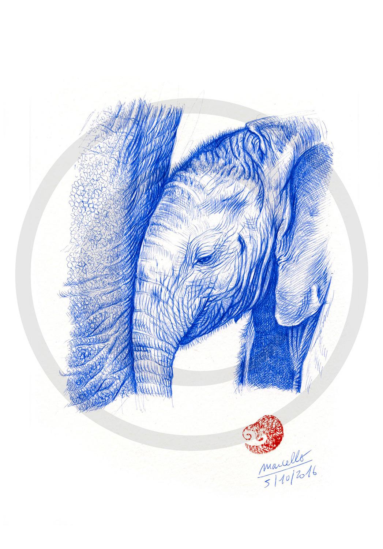 Marcello-art: Ballpoint pen drawing 356 - Baby elephant