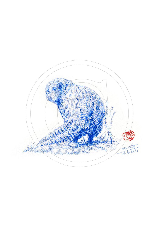 Marcello-art: Ballpoint pen drawing 357 - Strigops Kakapo