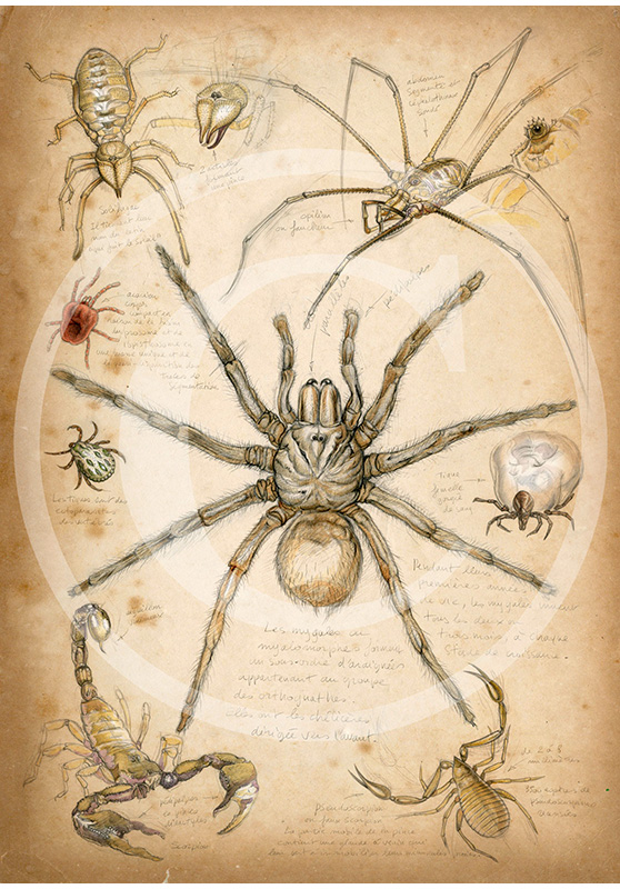 Marcello-art: Entomology 82 - Arachnids