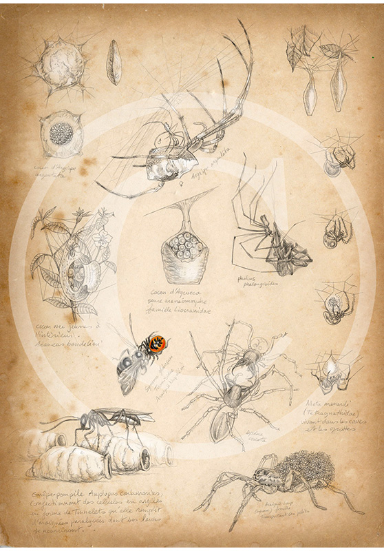 Marcello-art: Entomology 86 - Spider cocoons
