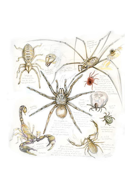 Marcello-art: Entomology 82 - Arachnids
