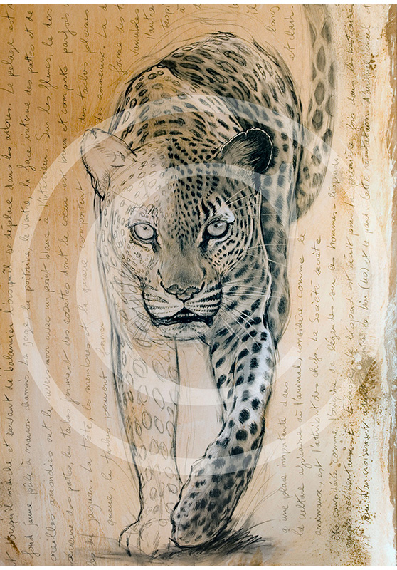 Marcello-art: Prints on canvas 119 - Leopard