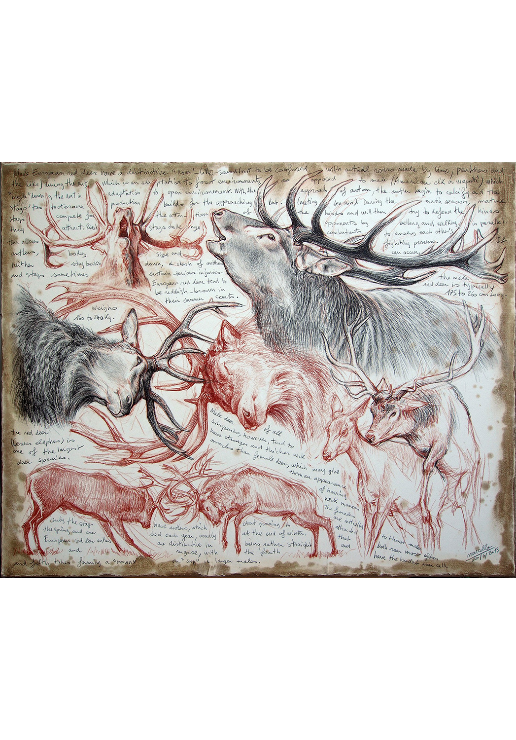 Marcello-art: Prints on canvas 226 - Red deer