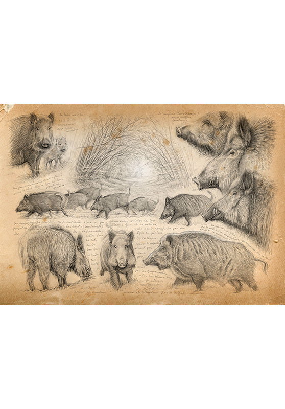 Marcello-art: Prints on canvas 272 - Boar