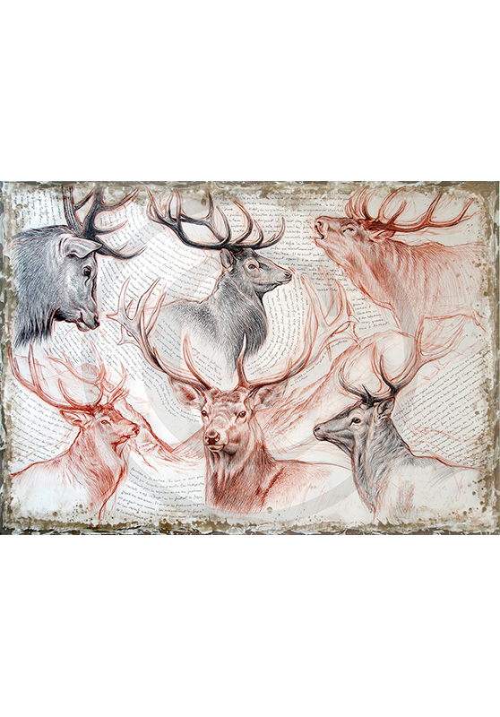 Marcello-art: Prints on canvas 278 - Red deer