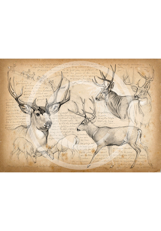 Marcello-art: Prints on canvas 57 - Mule deer