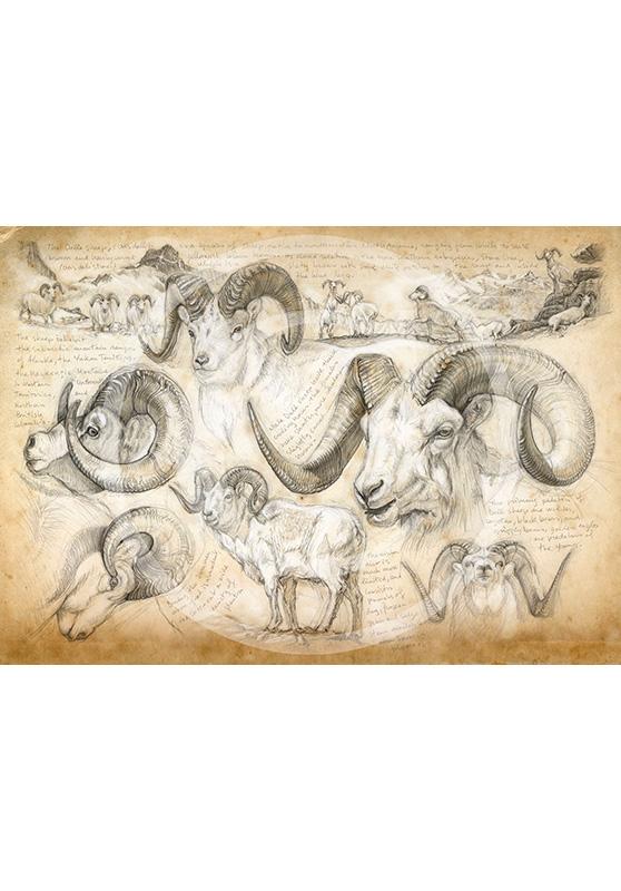 Marcello-art : Épreuves Sur toile 191 - Mouflon de Dall