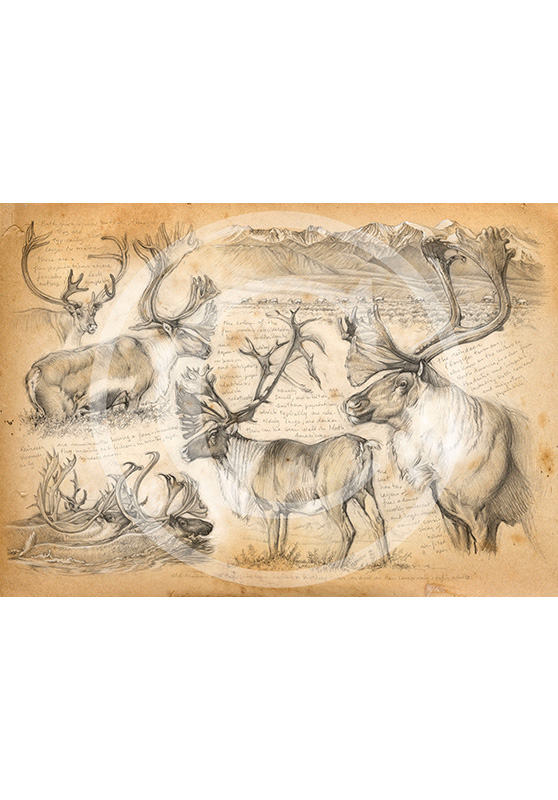 Marcello-art: Prints on canvas 190 - Mountain caribou