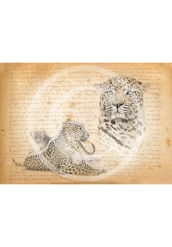Marcello-art: Prints on canvas 229 - Leopard mother