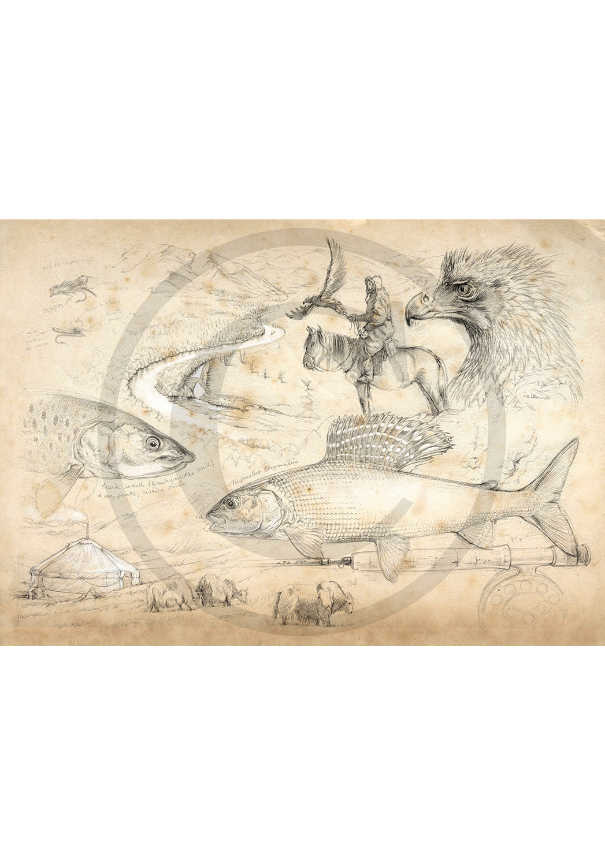 Marcello-art: Aquatic fauna 11 - Mongolia Flyfishing