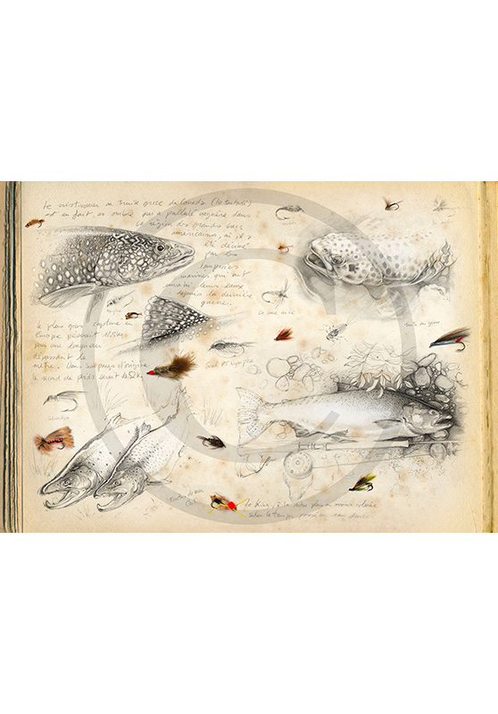 Marcello-art: Aquatic fauna 35 - Flyfishing-01