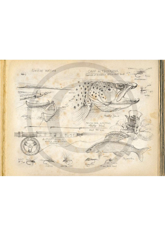 Marcello-art: Aquatic fauna 47 - Kaitum