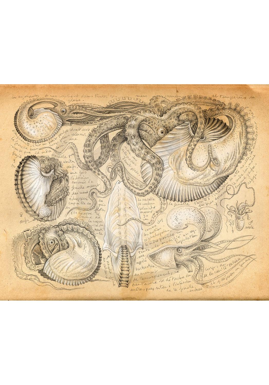 Marcello-art: Aquatic fauna 283 - Argonaut
