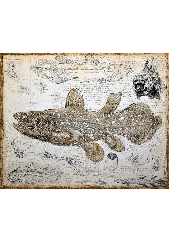 Marcello-art: Aquatic fauna 346 - Latimeria chalumnae