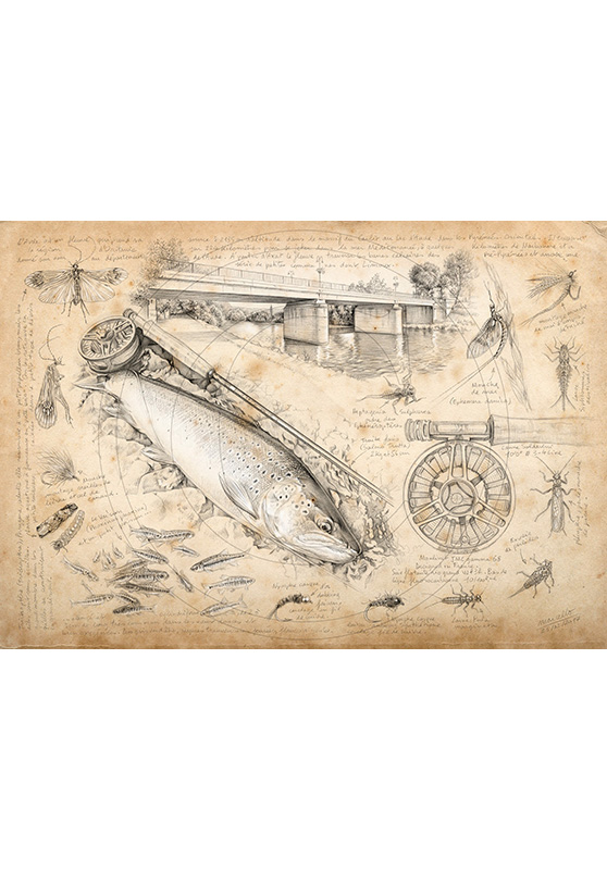 Marcello-art: Aquatic fauna 362 - Trout fario of Limoux