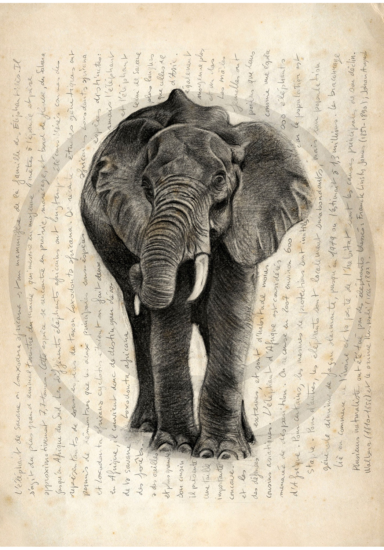 Marcello-art: African Wildlife 21 - African elephant
