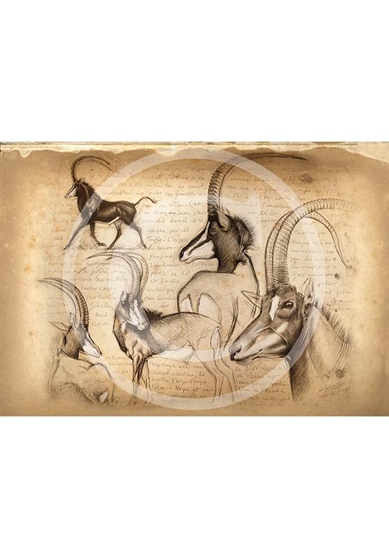 Marcello-art: African Wildlife 109 - Hippotragus niger - sable