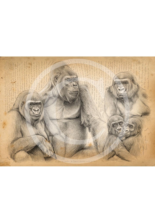 Marcello-art: African Wildlife 214 - Western lowland gorilla