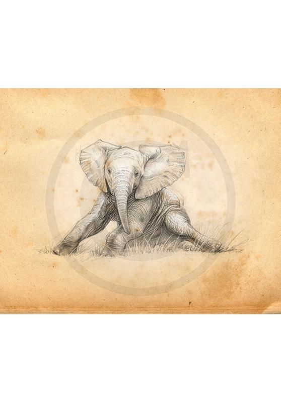 Marcello-art : Faune africaine 324 - Éléphanteau