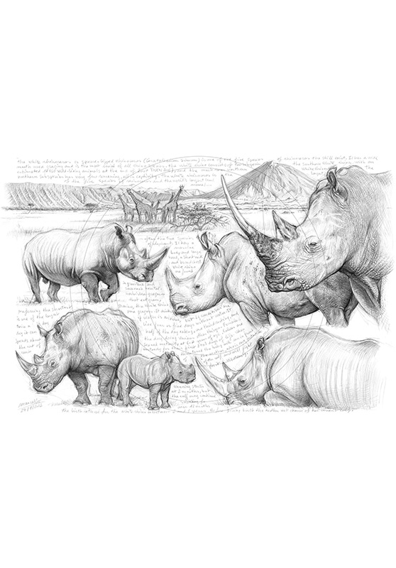 Marcello-art : Faune Africaine 198 - H&H Big Five Rhinocéros blanc