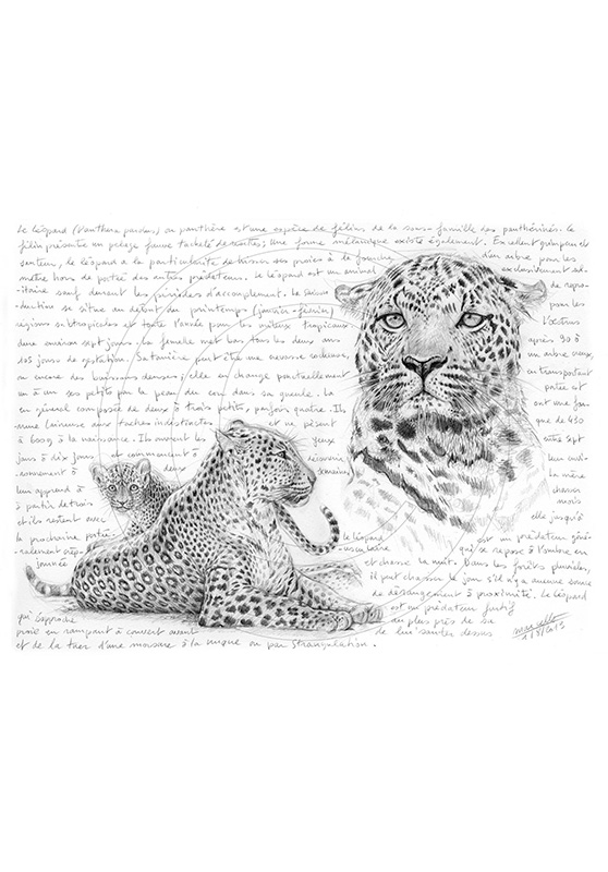 Marcello-art : Faune Africaine 229 - Mère léopard
