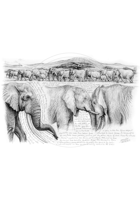 Marcello-art : Faune Africaine 246 - H&H Big Five Éléphant