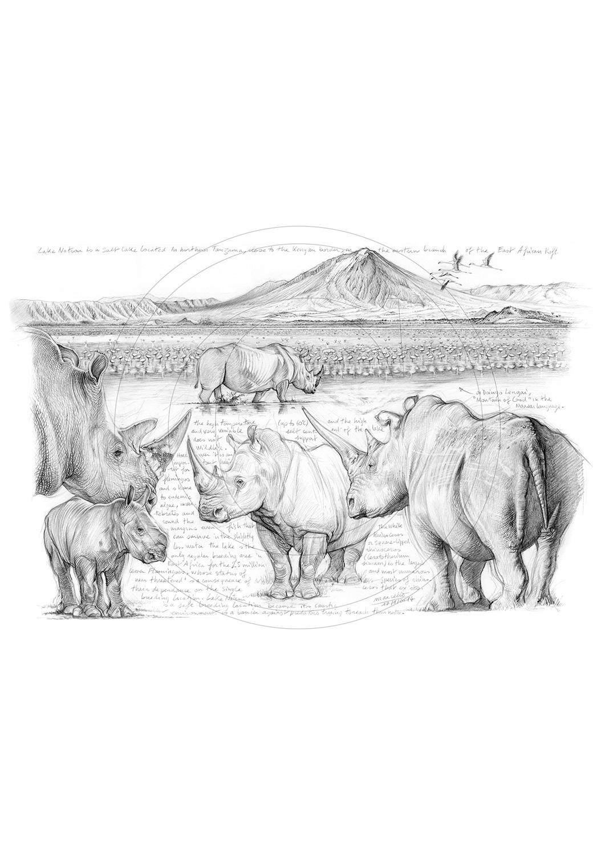 Marcello-art : Faune Africaine 248 - H&H Big Five Rhinocéros blanc
