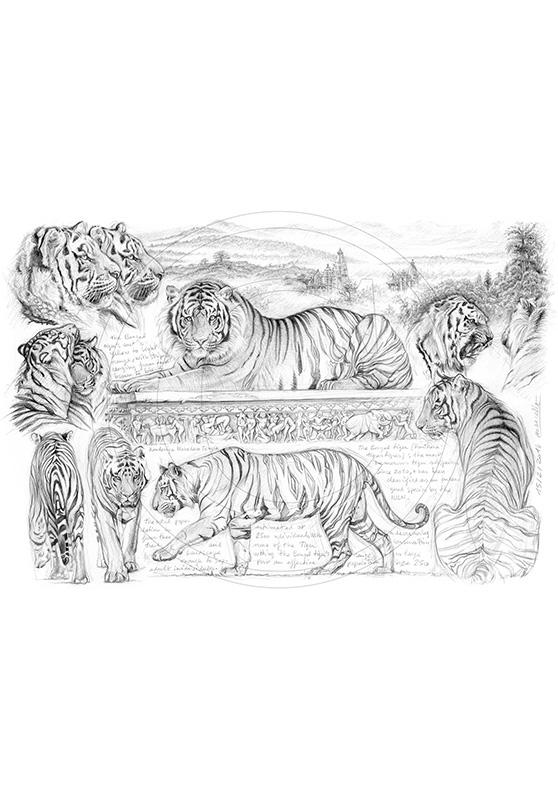 Marcello-art : Faune Africaine 249 - H&H Tigre