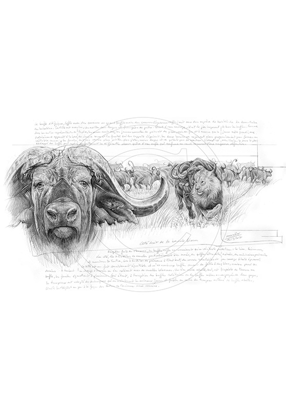 Marcello-art: African Wildlife 274 - Buffalo Caffer Engraving gun