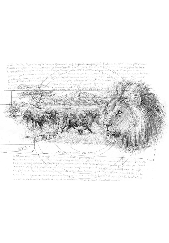 Marcello-art : Faune Africaine 275 - Lion Gravure Blaser