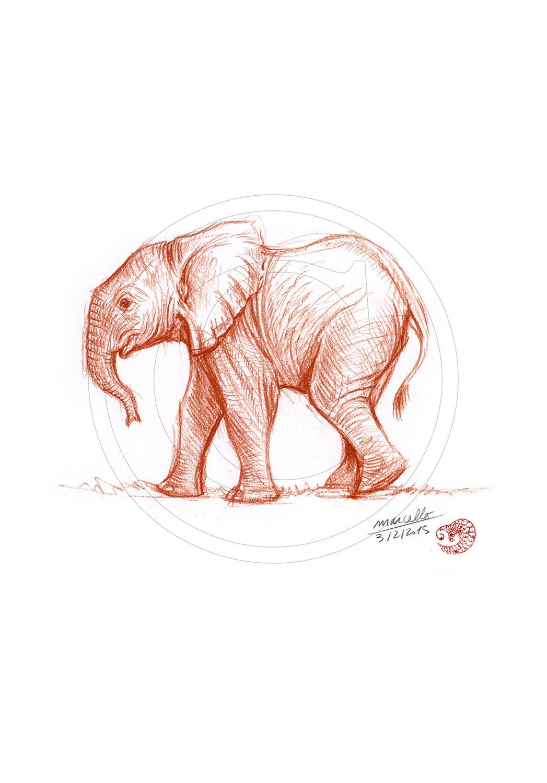 Marcello-art : Faune Africaine 290 - Éléphanteau bain de boue