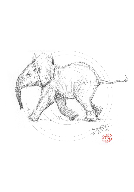 Marcello-art : Faune Africaine 291 - Éléphanteau premiers pas