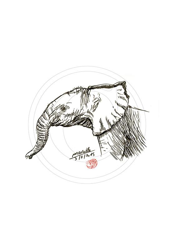 Marcello-art : Faune Africaine 294 - Éléphanteau