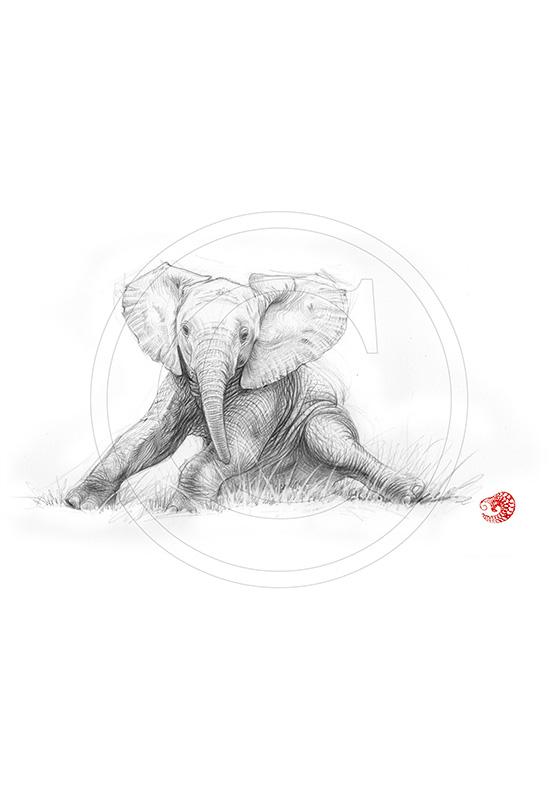 Marcello-art: African Wildlife 324 - Baby elephant