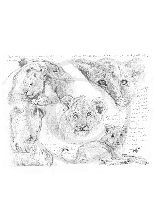 Marcello-art : Faune Africaine 330 - Lionceaux