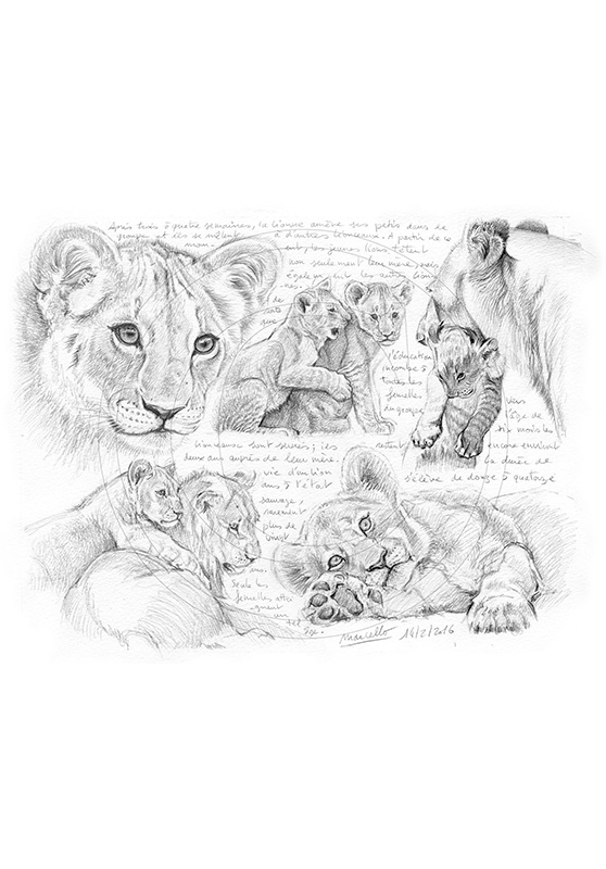 Marcello-art: African Wildlife 331 - Young lions