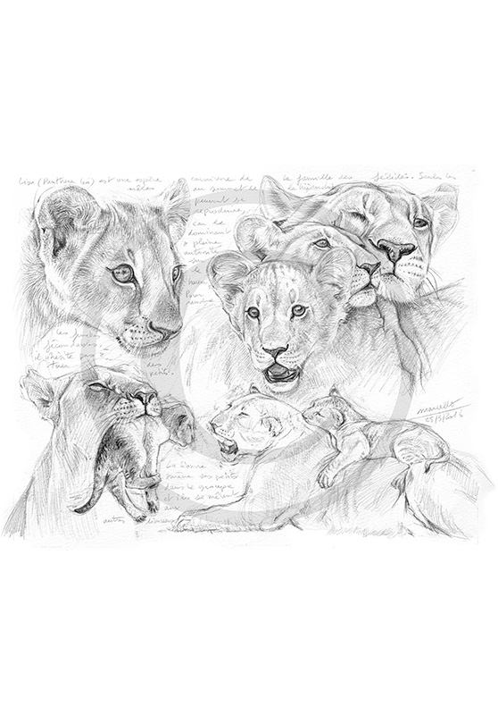 Marcello-art: African Wildlife 335 - Young lions